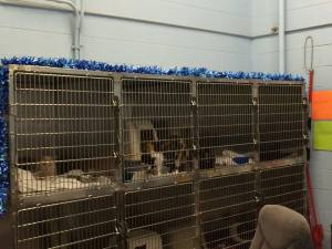 Cats at the Schererville Animal Control Facility.