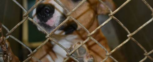Dogs waiting for homes at the schererville, indiana animal control facility
